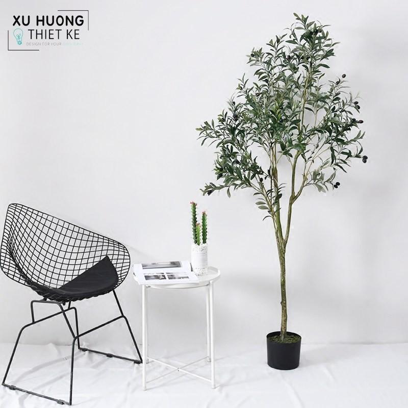 Decor không gian xanh với các mẫu cây ô liu là lựa chọn đúng đắng trong trang trí