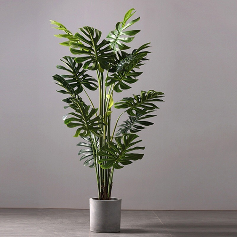 Mẫu cây Monstera Tropical trang trí