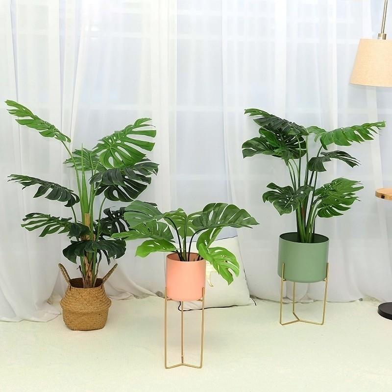 Trang trí không gian đẹp với mẫu cây trầu bà lá xẻ (monstera)