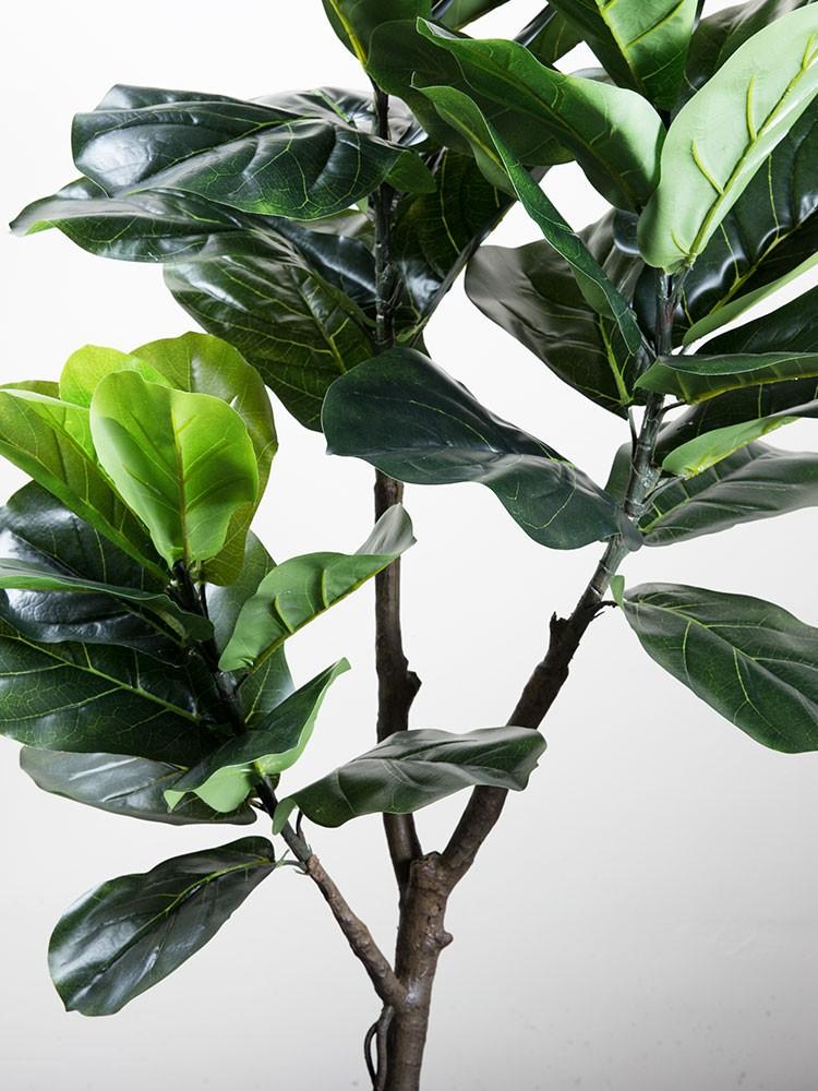 Một nhánh thân cây bàng Singapore giả