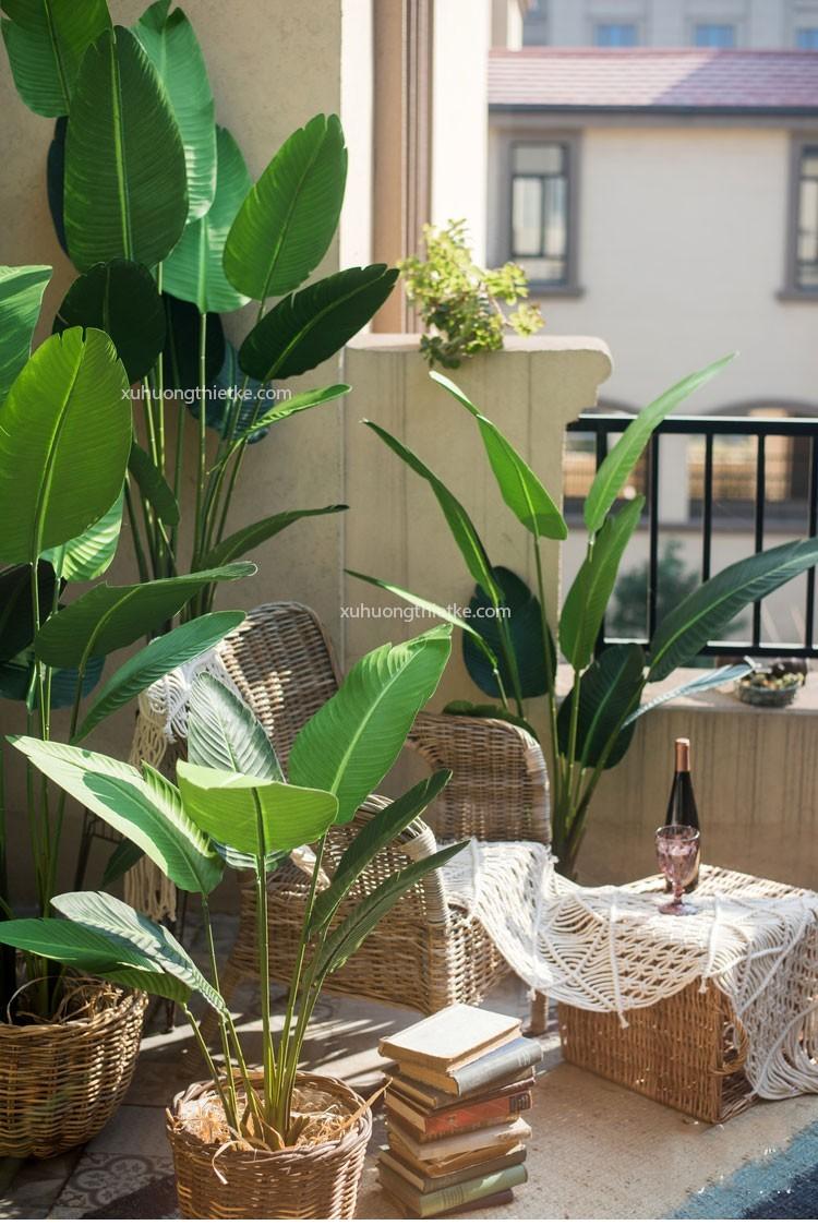 Trang trí cây chuối Singapore trong nhà