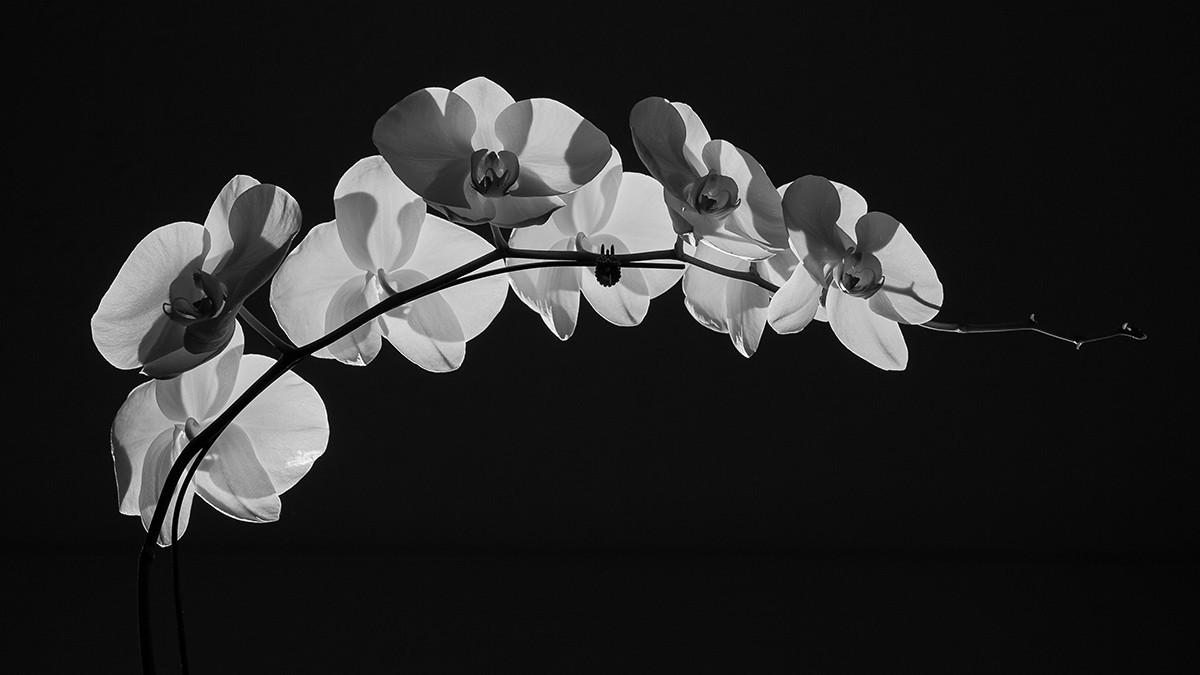 Vẻ đẹp nghệ thuật hoa phong lan
