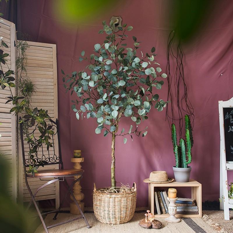 Vẻ đẹp của cây bạch đàn lá tròn trong trang trí nội thất