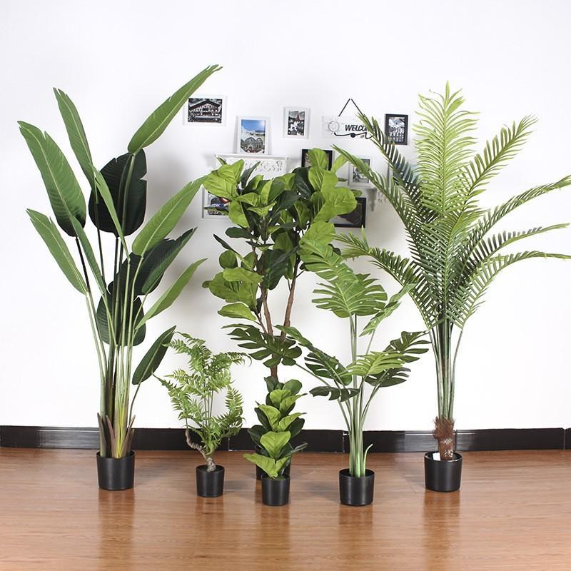 Sản phẩm cây dừa cảnh trang trí tại Xu Hướng Thiết Kế