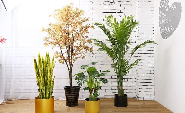 Cây lưỡi hổ là loài cây được dùng nhiều trong trang trí nội thất vì nó mang đến tài lộc và may mắn