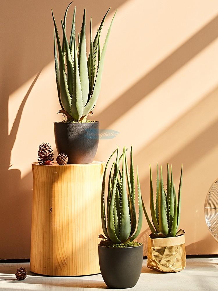 Vẻ đẹp của cây nha đam giả trong trang trí nội thất
