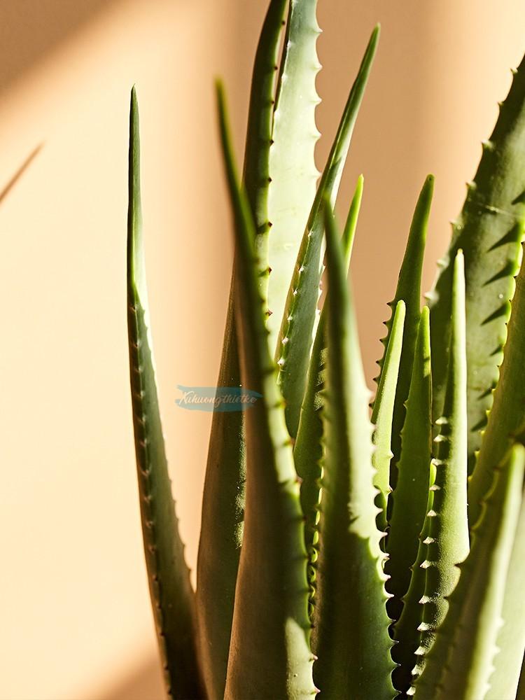 Lá cây nha đam giả được làm từ nhựa PE. Loại nhựa cao cấp với chất liệu mềm dẻo như cây thật