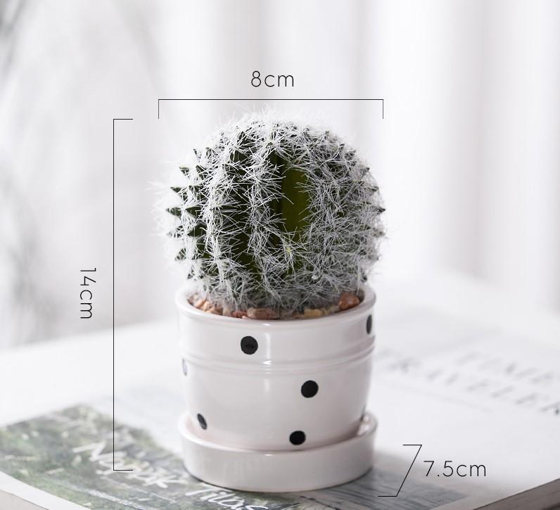 chau-cay-grow-mini-de-ban-4