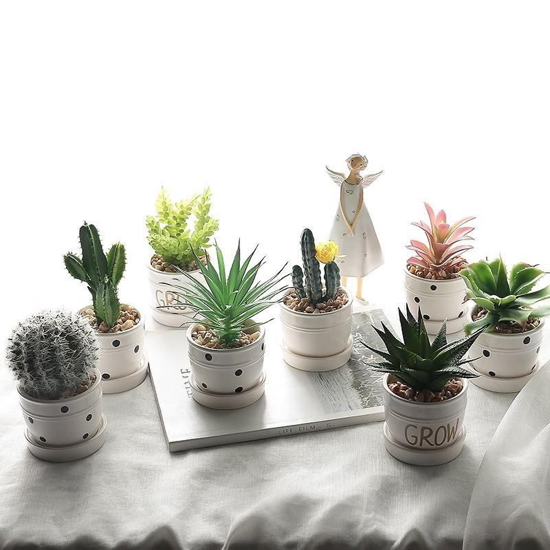 Dòng sản phẩm chậu cây cảnh grow mini để bàn xinh xắn