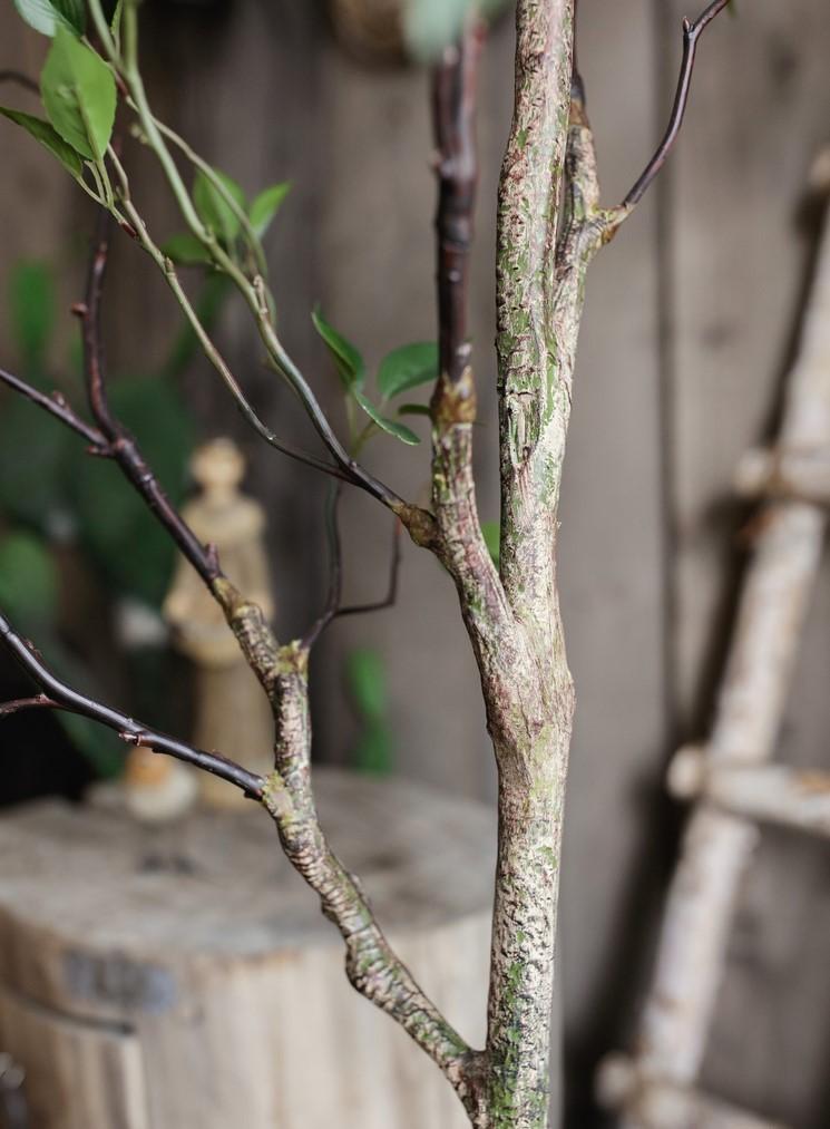 Thân cây khuynh diệp
